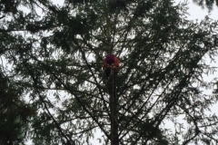 Beeler's Tree Service Arborist