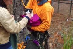 Cat Rescue Beeler's Tree Service