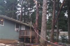 Hazard Tree Over House