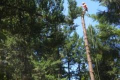 Tree Limbing Removal