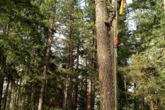 Grants Pass Oregon Tree Service