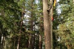 Grants Pass Oregon Tree Service