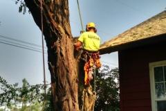 Hazard Tree Over Roof of House