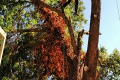 Full Tree Removal Medford Oregon