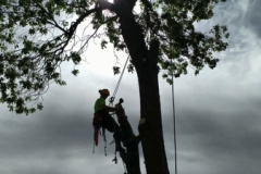 Beeler's Tree Service Grants Pass