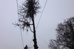 Tree Removal Over Power Lines