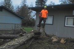 Tree Faller Grants Pass