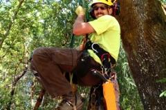 Sam Beeler Professional Arborist