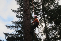 Climbing Arborist Grants Pass Oregon