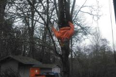 Arborist Climbing Tree Service