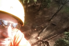 Arborist Grants Pass Oregon
