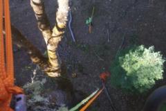 Rope Arborist Climbing
