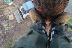Tree Climber Beeler's Tree Service