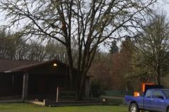Tree Reduction Beeler's Tree Service