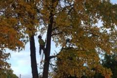 Fall Pruning Tree Cleanup