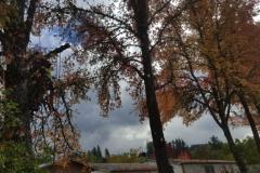 fall pruning tree service Grants Pass Oregon