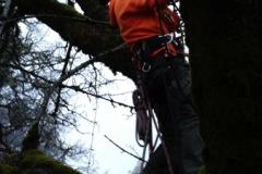 Beeler's Tree Service