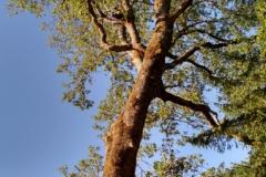 Climbing Arborist Grants Pass Oregon