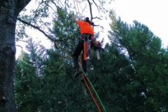 Climbing Arborist Pruning Grants Pass Oregon