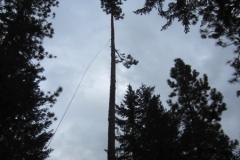 Zipline Rigging Beeler's Tree Service